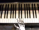 La mano robotica stampata in 3D che sa suonare il pianoforte (fonte: University of Cambridge) (ANSA)