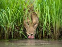 Mostra Wildlife Photographer of the year al Forte di Bard - Isak Pretorius (ANSA)